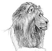 Zeichenmedien Und Techniken Zum Zeichnen Von Tieren