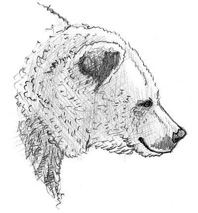 Zeichnung eines bären