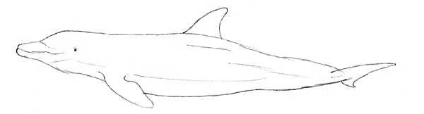 einen delfin zeichnen lernen von der skizze bis zur zeichnung. Black Bedroom Furniture Sets. Home Design Ideas