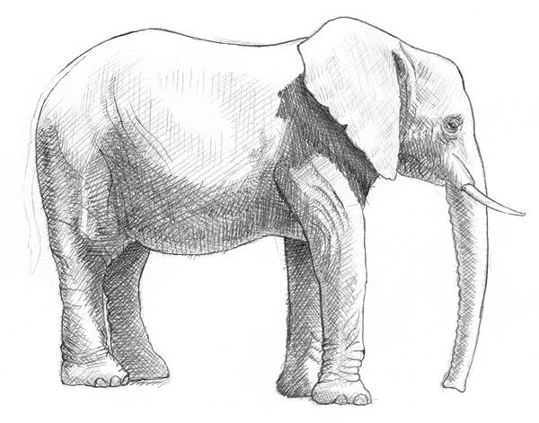 Zeichnung elefant ohne abbildung von details der haut