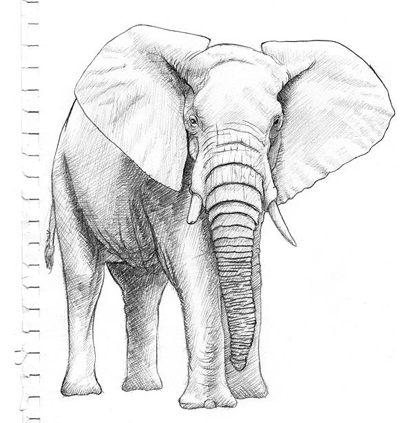 Elefanten Malen Bilder