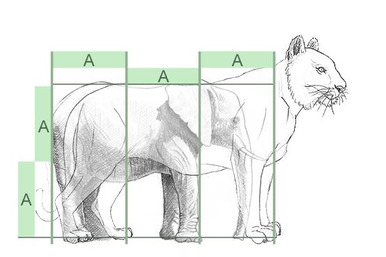 elefant zeichnen lernen. Black Bedroom Furniture Sets. Home Design Ideas