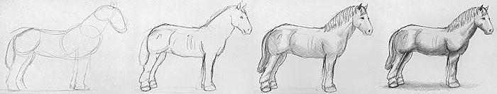 ein pferd zeichnen lernen. Black Bedroom Furniture Sets. Home Design Ideas