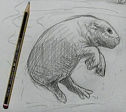 anleitung ein junges flusspferd zeichnen tiere zeichnen lernen. Black Bedroom Furniture Sets. Home Design Ideas