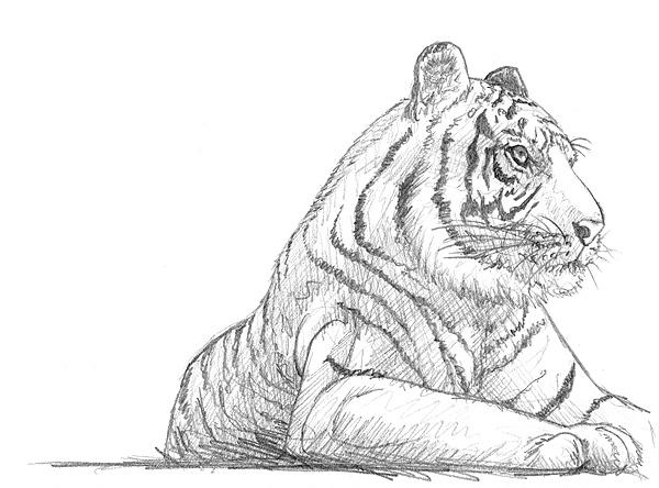 tiere zeichnen