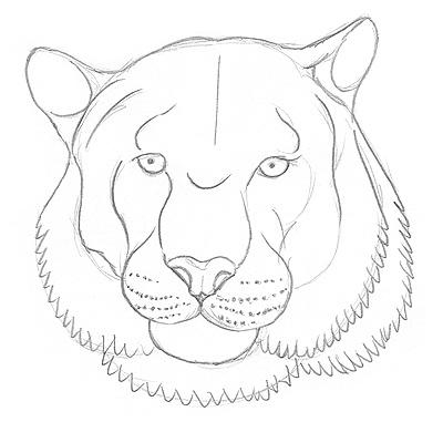 Einen Tiger Zeichnen Lernen