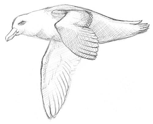 Einen Vogel zeichnen lernen