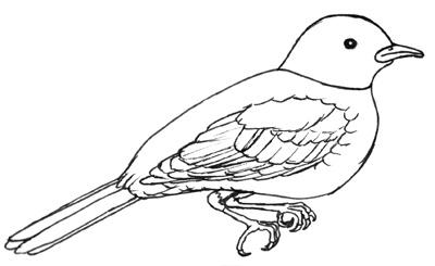 Flügel Zeichnen